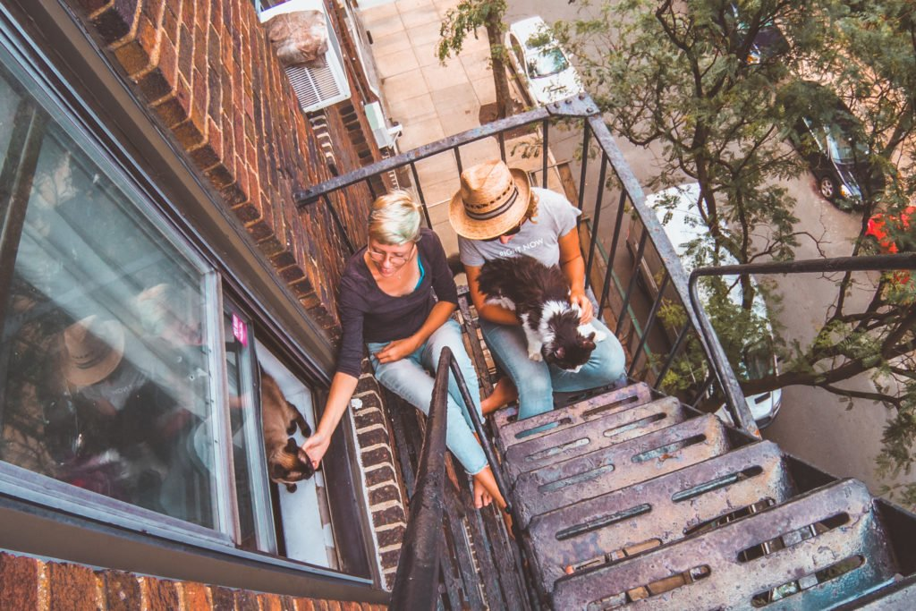 become perfect house-sitter, new york city fire escape, cats, trustedhousesitters