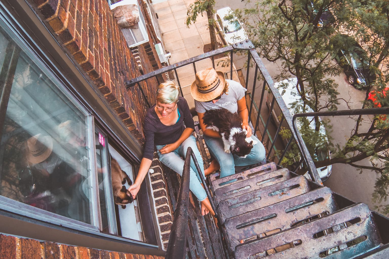 how to become house-sitter, new york city fire escape, cats, trustedhousesitters