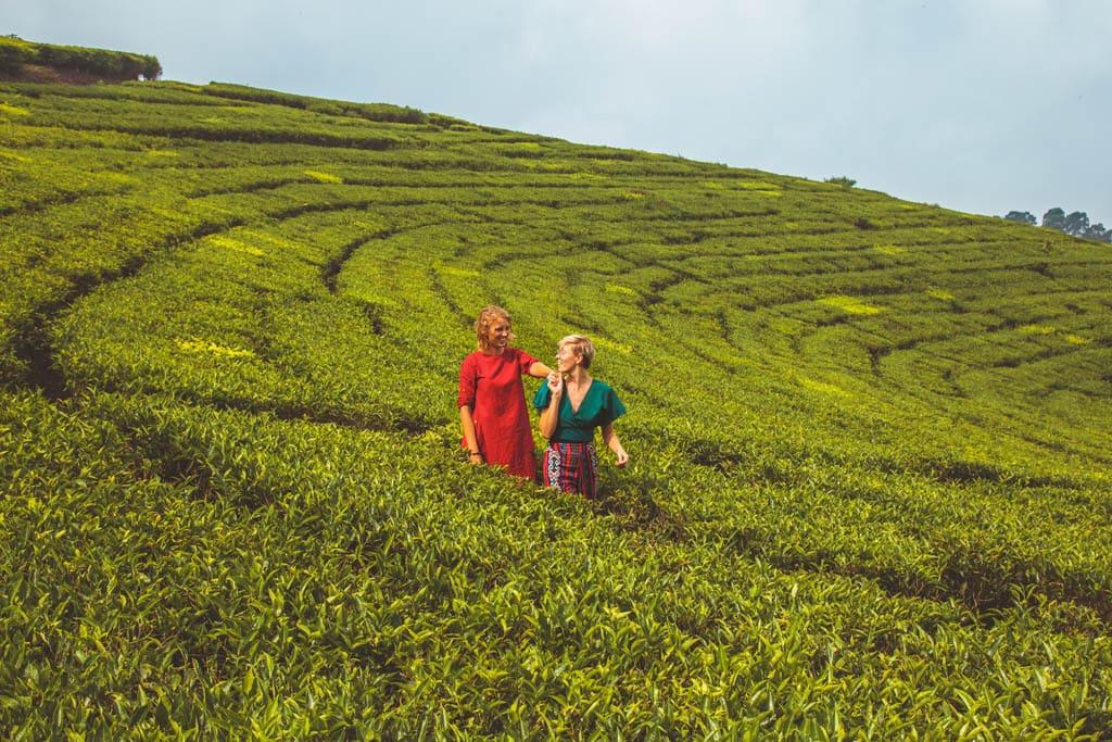 Bandung rice fields