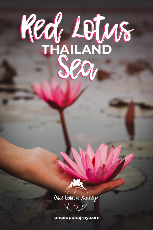 Red Lotus Sea Thailand Pin