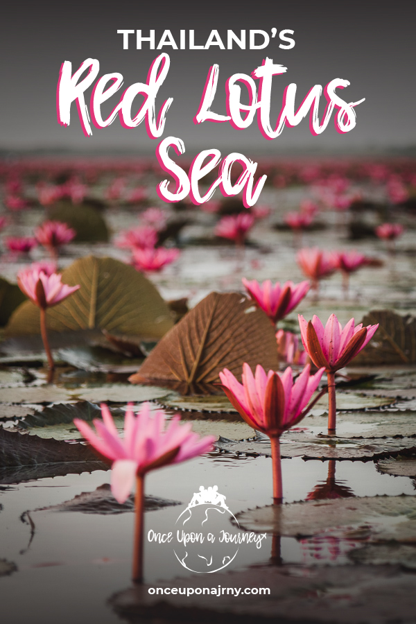 Thailand's Red Lotus Sea