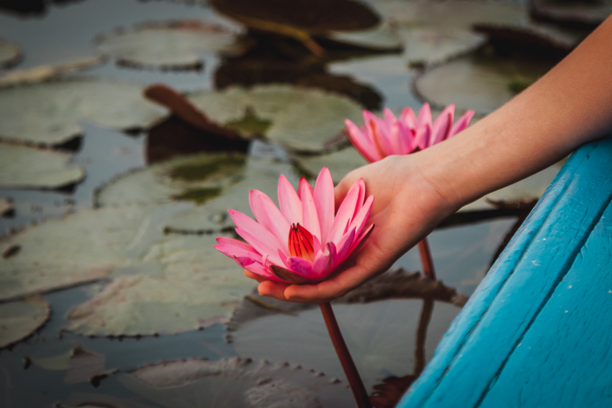 The Ultimate Guide to the Red Lotus Sea Thailand