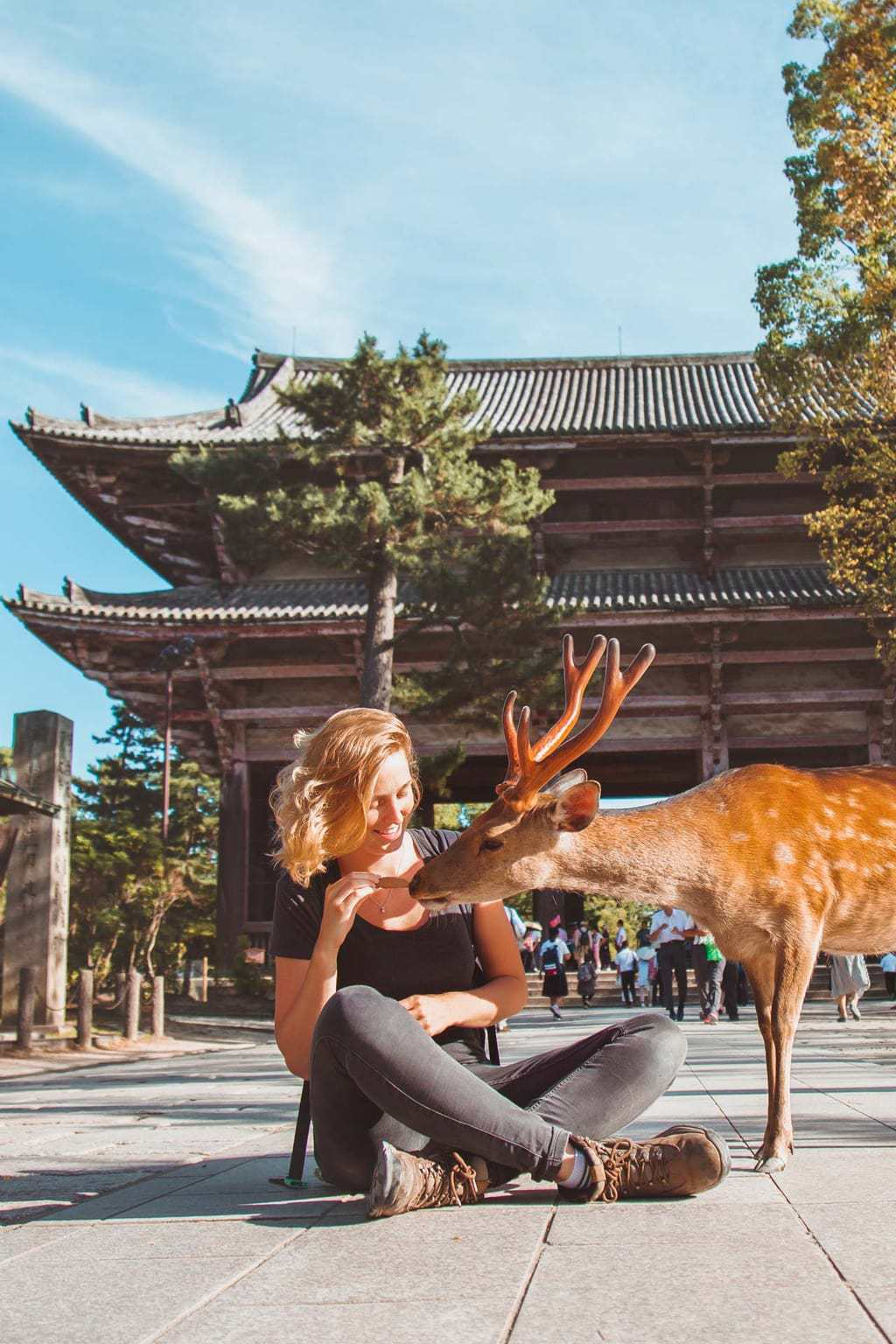 Deer in Nara, Osaka, Lesbian Japan