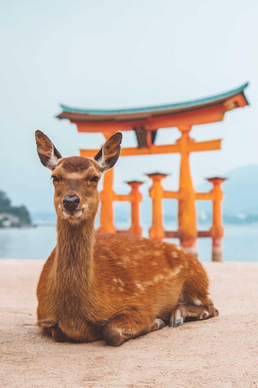 Itsukushima Shrine, Miyajima, LGBT Japan