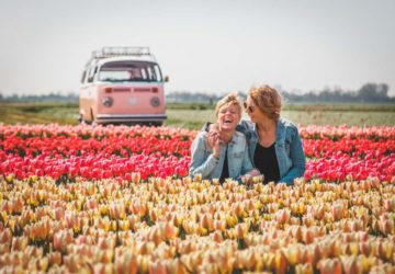 Exploring the Tulip Fields in the Netherlands in a VW Bus
