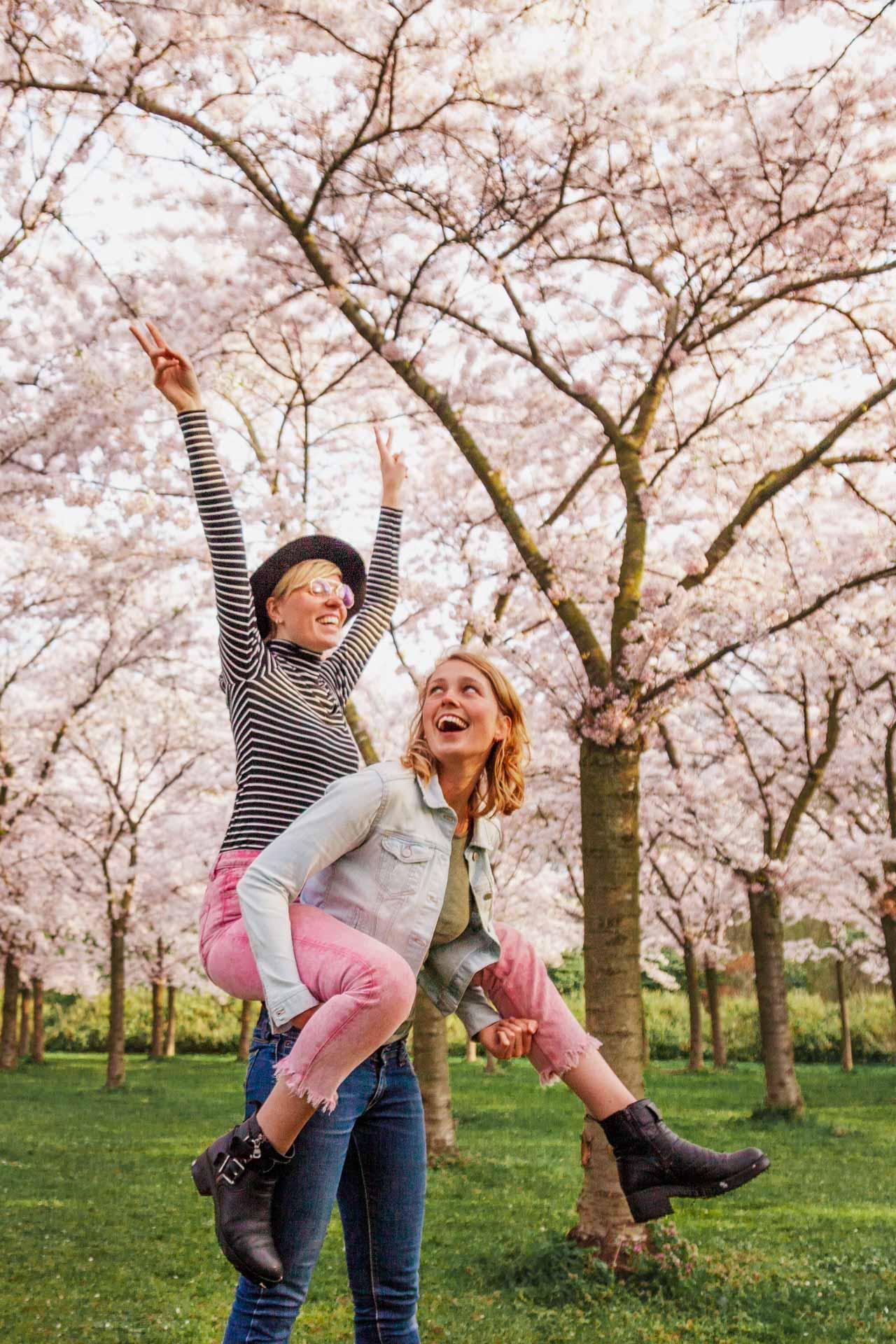 Sakura, Cherry Blossom, Kersenbloesemtuin, Amsterdamse Bos