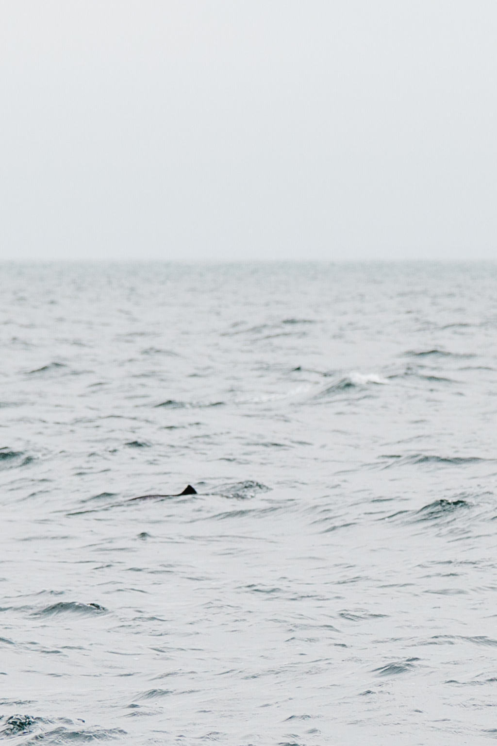 Kullaberg National Park, Whale Safari, Skåne, Sweden