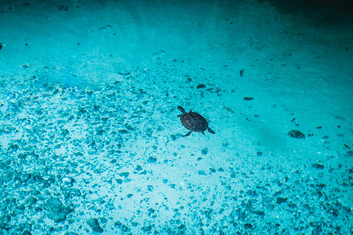 Gran Cenote Turtles