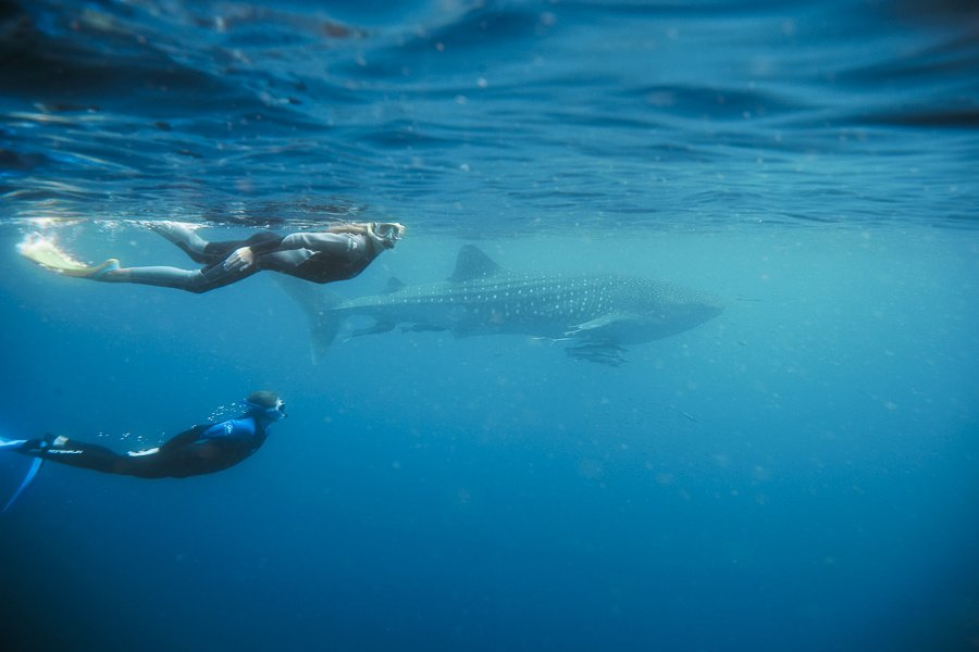Isla Mujeres snorkeling with whale sharks