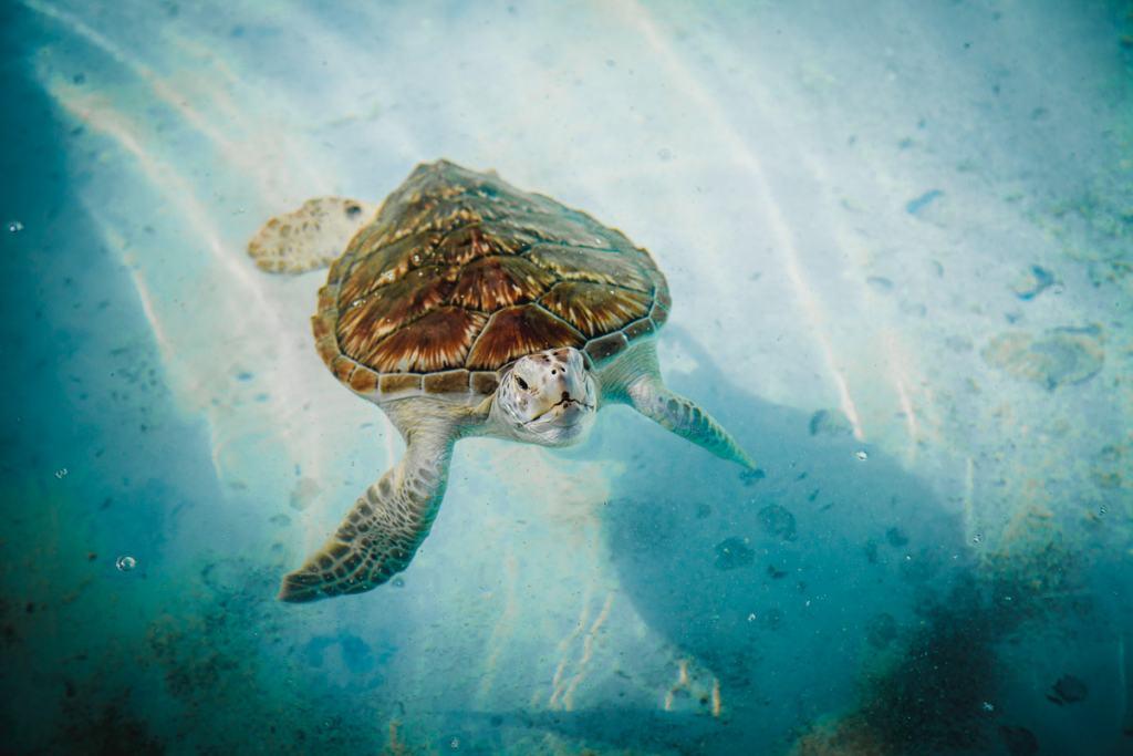 Tortugranja Isla Mujeres turtle farm