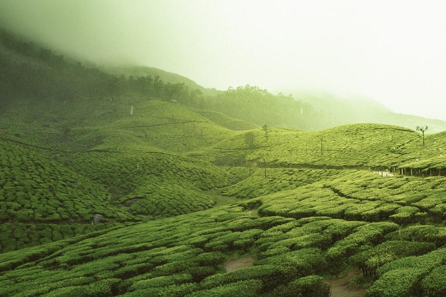 Munnar Hills tea plantation Kerala trip