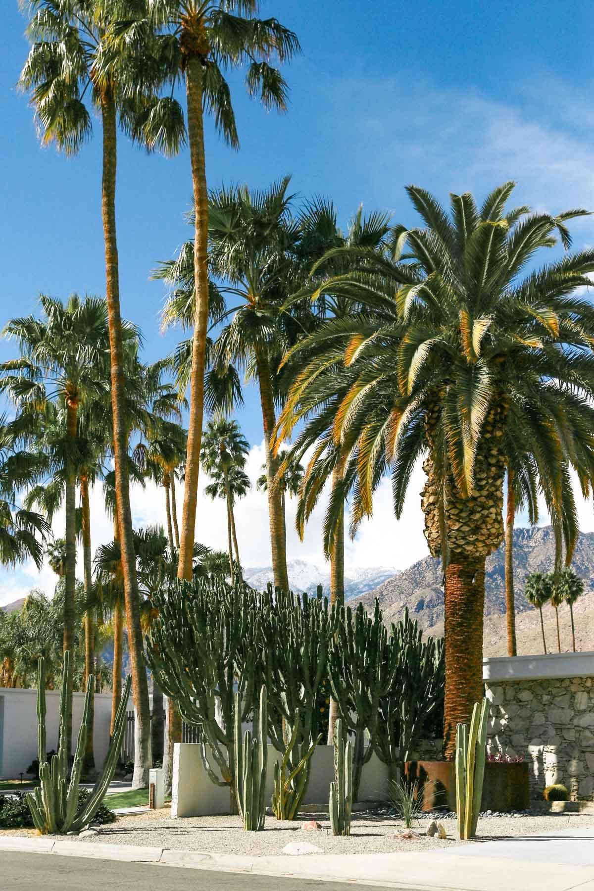 Palm Springs Dinah Shore Lesbian Vacation