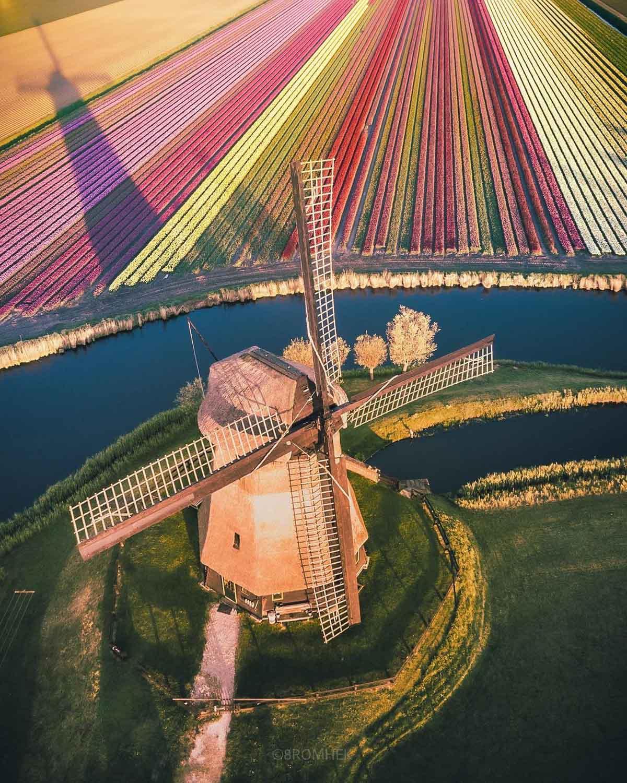 Tulpenveld molen Schermerhorn door fotograaf Kéhmor Statia