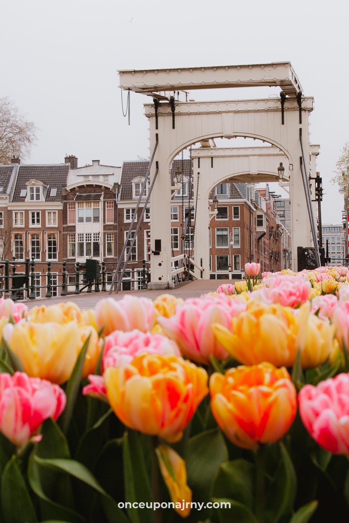 Tulpfestival Amsterdam tulpenfestival