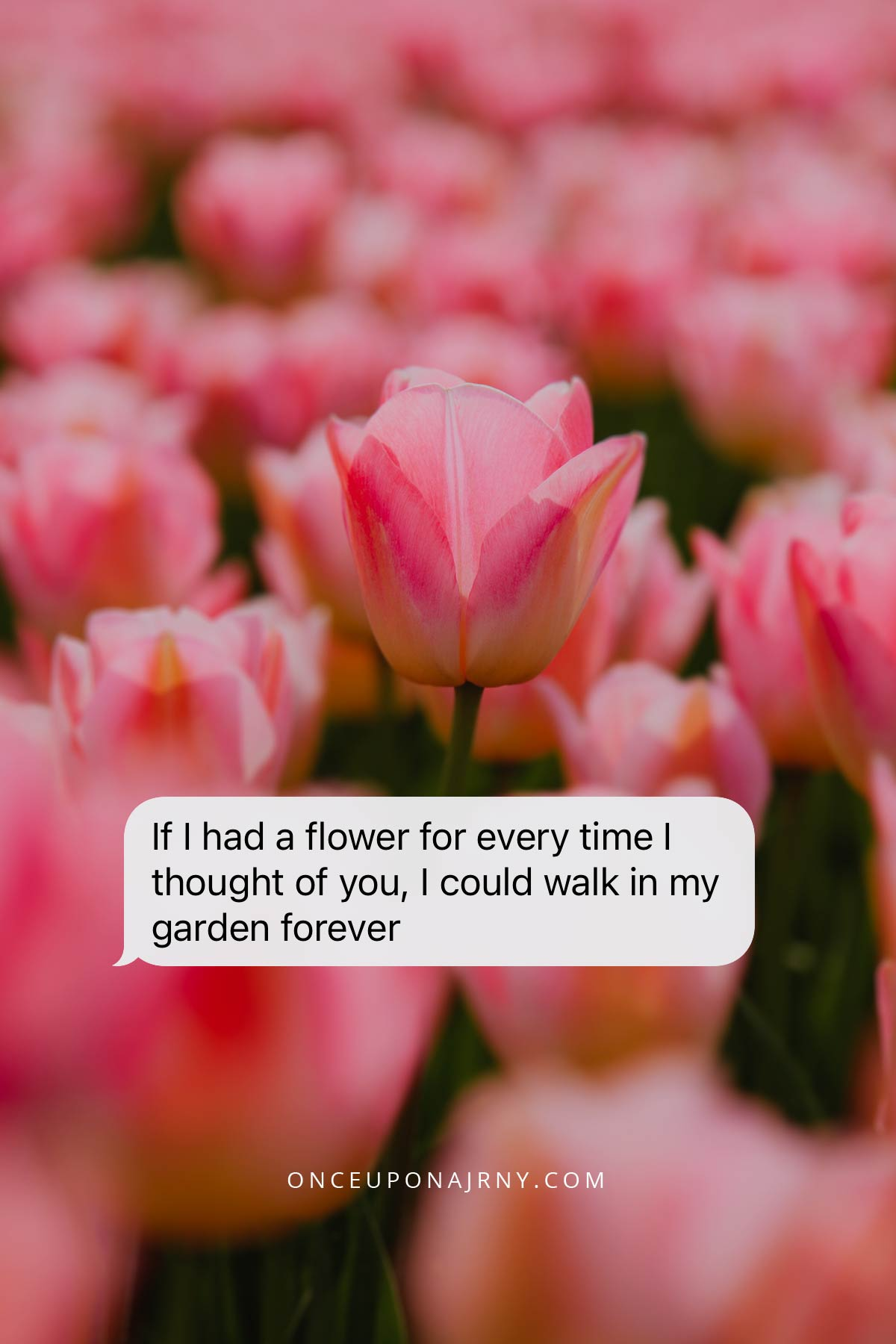 If I had a flower for every time I thought of you, I could walk in my garden forever flower lesbian quote