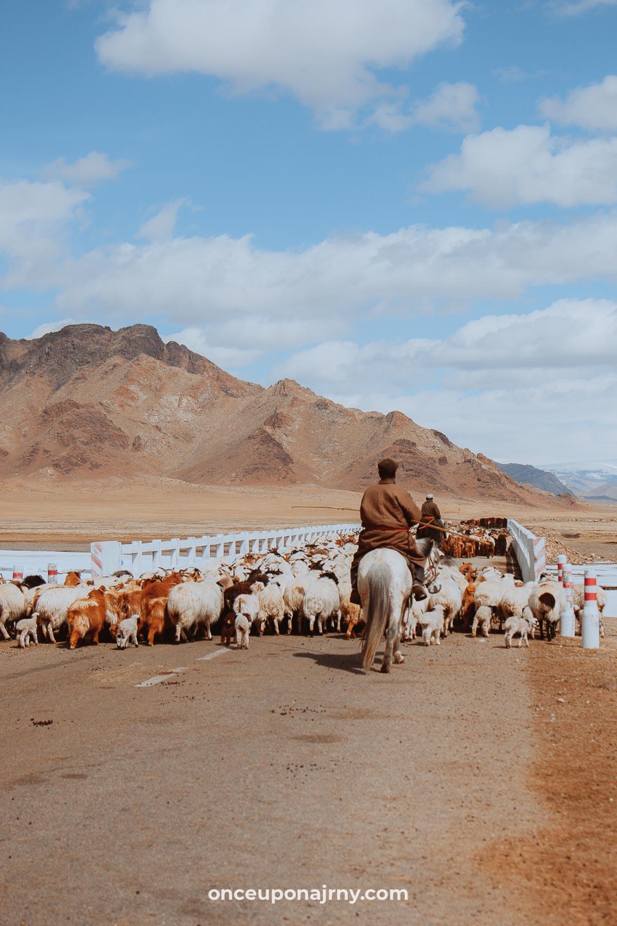 Nomadic family Mongolia moving in spring